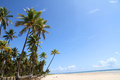 Beach of Bahia Stock Images