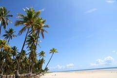 Beach of Bahia. At the beach of Bahia, Brazil, South america Stock Images