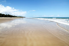 Beach of Bahia Stock Image