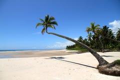 Beach of Bahia. At the beach of Bahia, Brazil, South america Stock Image