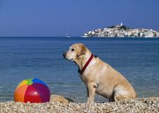 Beach ball keeper. A dog labrador sitting next the beach ball, sea and old own at the background stock photography