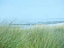 Beach of the Baltic Sea near Ahrenshoop  with dunes and marram grass in the foreground Royalty Free Stock Photography