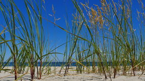 Beach on the Baltic Sea stock video footage