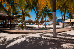 Beach bar with hammocks and palm trees Stock Image