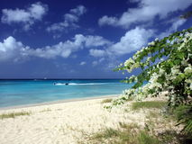 Beach at Barbados Stock Images