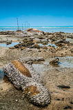 Beach and Barnacles Royalty Free Stock Photos