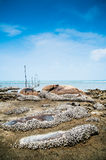 Beach and Barnacles Royalty Free Stock Image