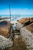 Beach and Barnacles Stock Images
