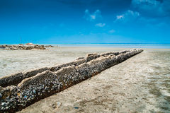Beach and Barnacles Stock Photography