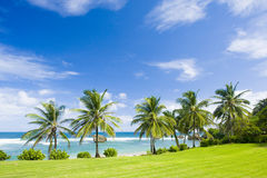 Beach of Bathsheba Royalty Free Stock Photo
