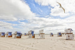 Beach with beach chairs at Sylt. Seagull flying over beach chairs at Sylt beach royalty free stock images