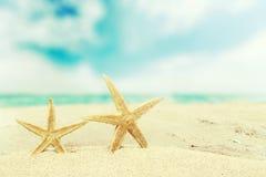 Beach. Starfish caribbean ocean concept summer background Stock Photography