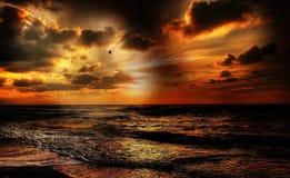 Beach, Beautiful, Bird Royalty Free Stock Photography