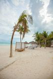 Beach beds near big palmtree at tropical exotic Stock Images