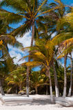 Beach beds under palm trees on Caribbean Stock Images