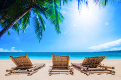 Beach beds under the palm trees Royalty Free Stock Photography