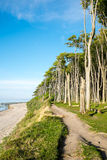 Beach and beech trees Royalty Free Stock Photography