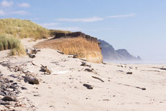 Beach at Big Creek. The essence of the Oregon coast with grass-covered dunes climbing down a rugged cliff to the sandy beach with misty headlands in the royalty free stock image
