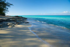 Beach on Bimini with trees and vegetation Royalty Free Stock Image