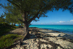 Beach on Bimini with trees and vegetation. Bimini of the Bahamas beach with sparkling aqua waters and blue skies. sandy beaches with palm trees Royalty Free Stock Photos