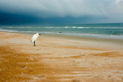 Egret on a beach Stock Images