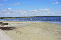 Beach bird Royalty Free Stock Photos