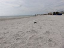 Beach bird Royalty Free Stock Images
