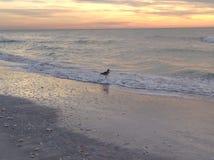 Ocean  bird Stock Image