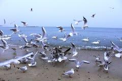 Beach birds brawl Royalty Free Stock Photo