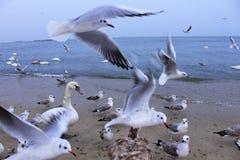 Beach birds bustle Stock Image