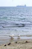 Beach birds and distant ship Stock Photos