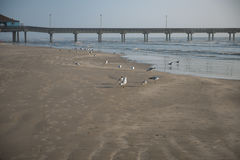 Beach Birds and Gulls next to a fishing Pier. Here are some beach birds, and gulls next to a fishing pier stock image