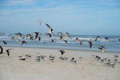 Beach and birds Stock Photo