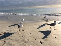 Beach birds Stock Photography