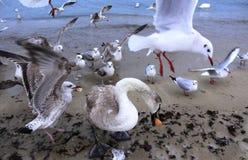 Beach birds Stock Images