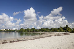Beach On Biscayne Bay. The Beach on Biscayne Bay in Oleta River State Park Stock Image