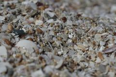 On the beach of the Black Sea a small shellfish. From which the whole beach consists Royalty Free Stock Photography