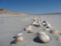 At the beach of Blavand / Denmark royalty free stock image