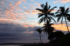 Beach and blue color sky with palm trees by the sea on sunset. Photo Stock Photo