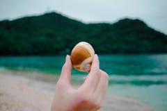 Beach, Blur, Cliff, Close-up stock images