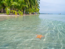 Beach in bocas del toro. Panama, Central America stock images