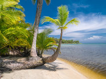 Beach in bocas del toro. Panama, Central America royalty free stock images