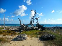 Beach in Bonaire Stock Photos