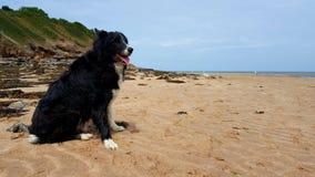 Beach border collie stock photo