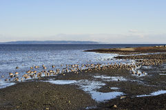 Beach of boundary bay regional park Stock Image