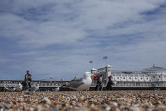 Beach in Brighton, seagulls and the pier. Stock Photography