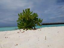 Beach. Bush on the ocean beach Stock Images