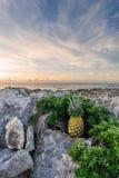 Beach, Cactus, Clouds Royalty Free Stock Photos