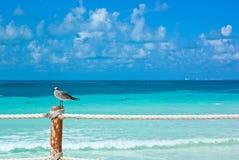Beach in cancun. Seagull in cancun caribbean beach Stock Image