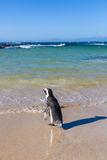 Beach in Cape Town, South Africa. Beautiful beach in Cape Town, South Africa Royalty Free Stock Images